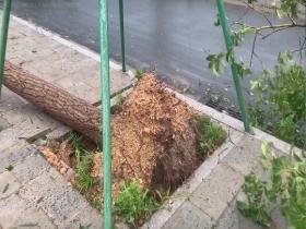 臺風過后的臺州 樹木被連根拔起 垃圾桶被吹斷