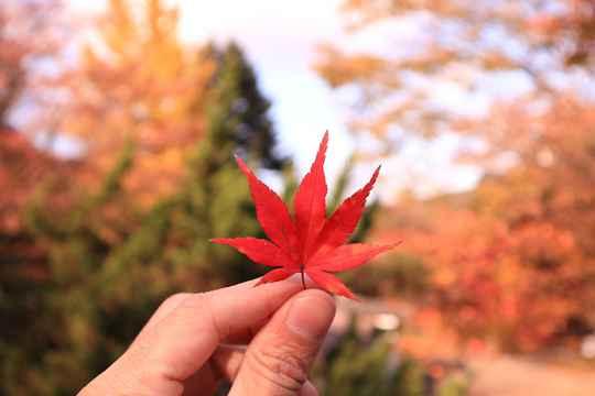 北京香山观红叶