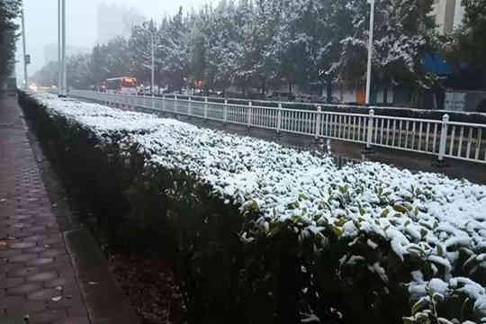 初雪光临石河子 虽美但也带来了不便