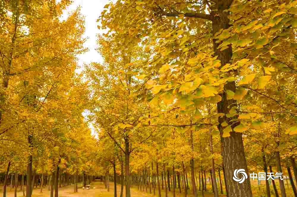 深秋时节 多地自然景观美如画