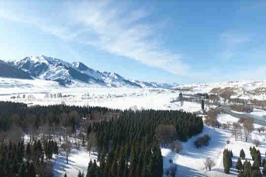 11月21日 新疆伊犁河谷迎来今年第一场大雪