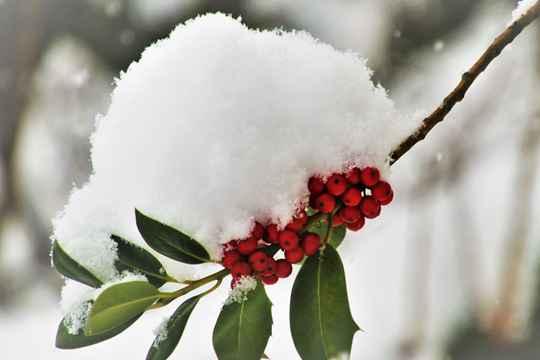 """节气365#小雪#:""""瑞雪兆丰年""""到底准不准?"""