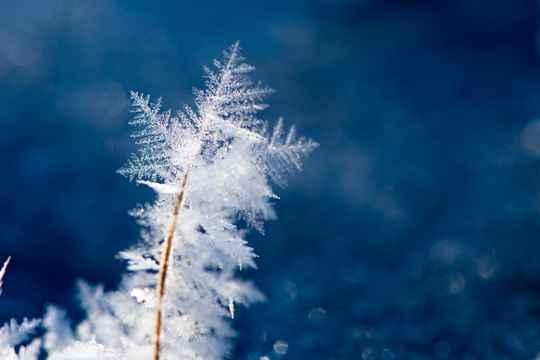 節氣365#小雪#:小雪節氣之雪花揭秘