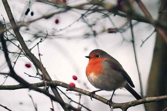 #节气365#之大雪?#27721;?#21495;鸟是鸟吗?