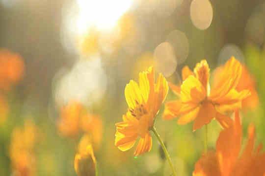 """春回大地 我想和你一起""""云赏花"""""""