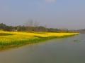 四川内江:油菜花盛放 拥抱早春蓝天