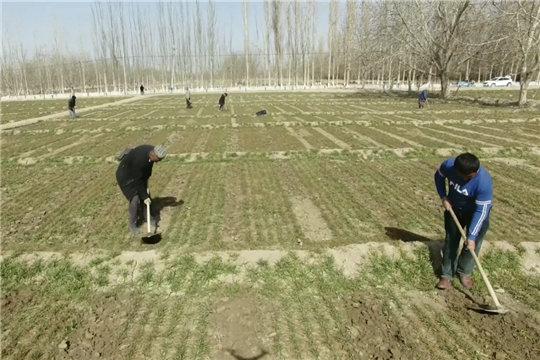 新疆和田气温回升快 春耕春播忙
