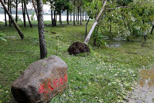 """臺風""""海神""""來襲 吉林市大樹被刮倒"""