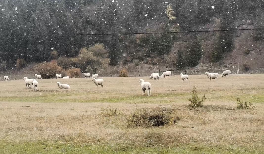 乌鲁木齐:牧民转场忙 雪花添纷扰