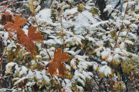 成都西嶺雪山迎來今秋第一場雪