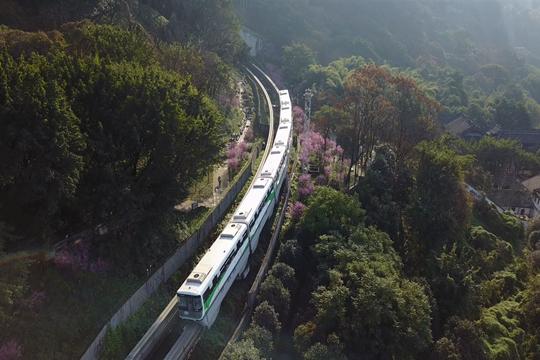 重庆:列车穿行花海  驶向春天