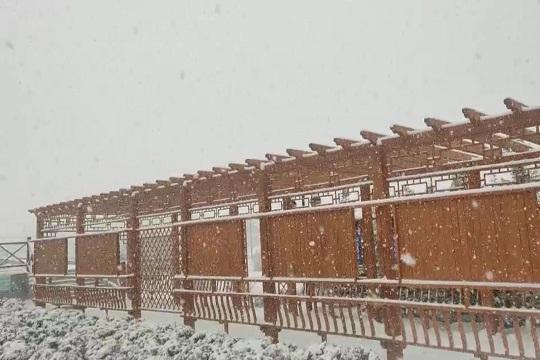 新疆温泉县迎鹅毛大雪