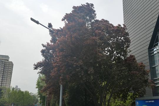 今日北京小雨光顾 出行需添衣