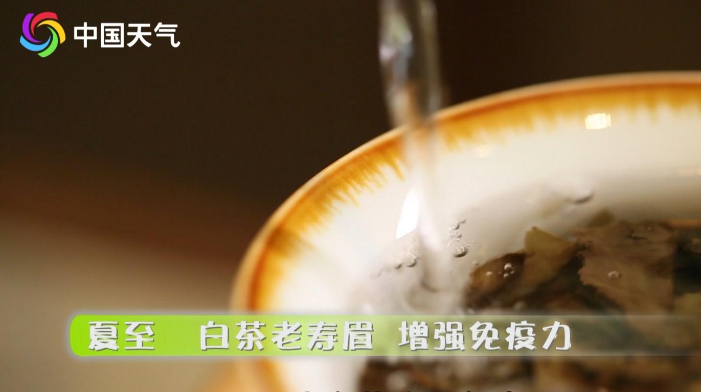 夏至:白茶老寿眉增强免疫力