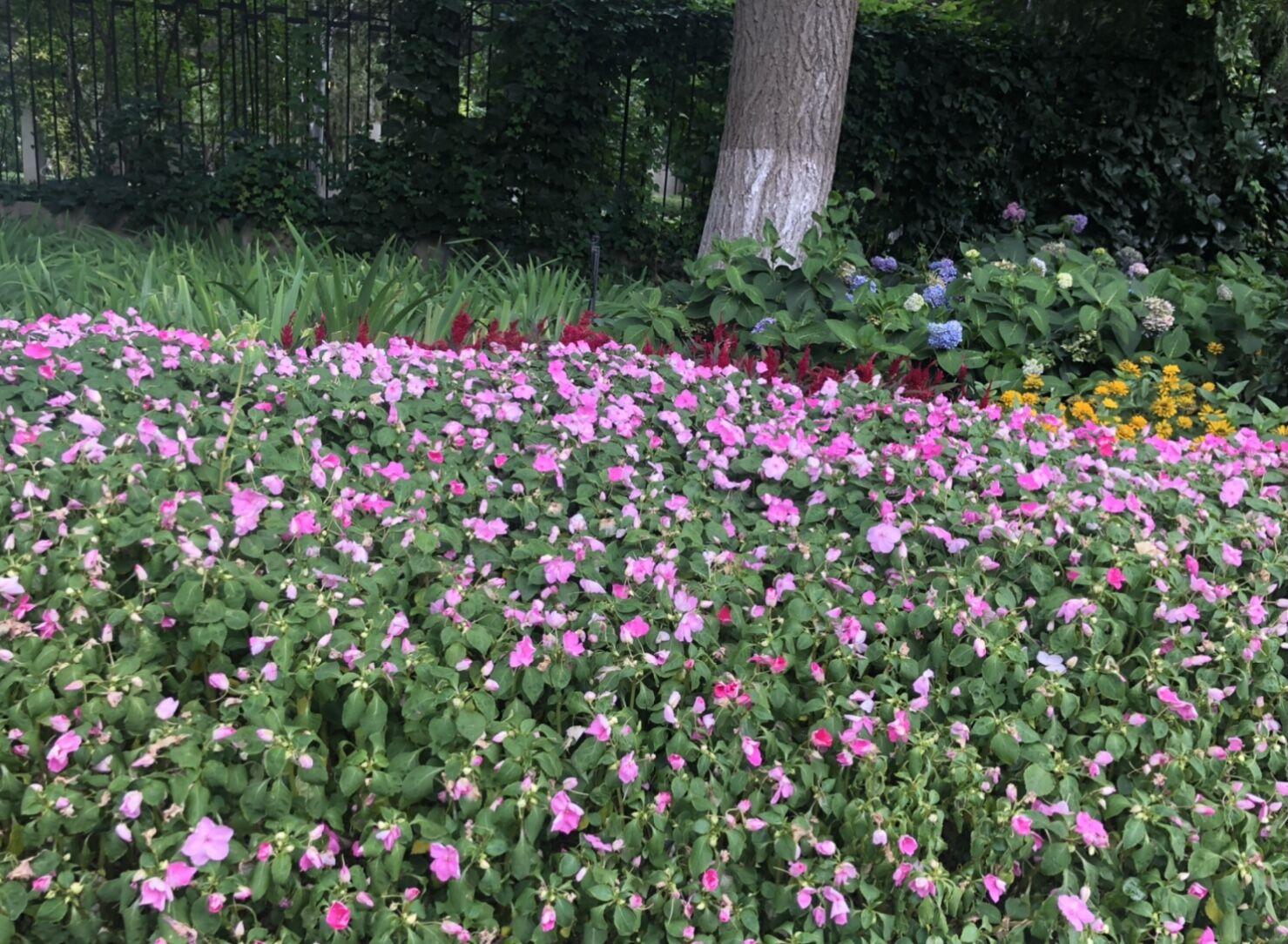 2021北京夏秋季花粉期来了!