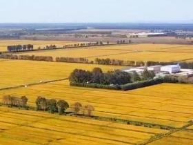 我的天空:金黄的麦浪一望无际