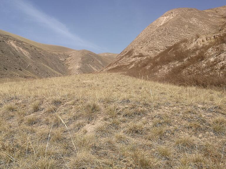 武威:降水稀少,山区旱地墒情差