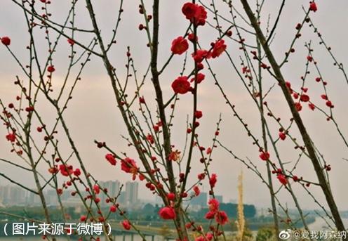 今明天气平稳 28日冷空气入粤
