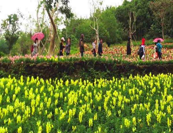 三月赏花看景来广西 总有一款花适合你