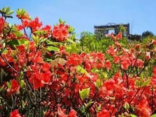 四月广西9大杜鹃花胜地 美得令人窒息