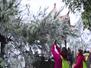 【视频】柳州气温时隔16年破冰点 出现雨凇景观