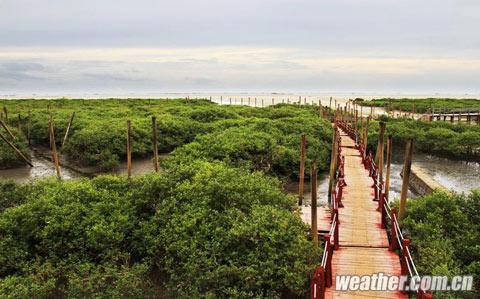 北海金海湾红树林景区图片
