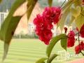 中国天气网广西站讯 进入3月末,东兰以晴暖天气为主。近日,国清中学校园内三角梅竞相绽放,娇媚的花儿一簇簇憩在软软的枝条上,那一朵朵鲜红的花在春风的吹拂下犹如小姑娘穿上红艳的裙子在摆动着柔美的腰肢。(图文/谭金雨 覃宏宇)