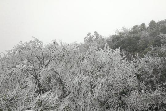 全州天湖出现雾凇美景