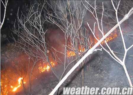 过火后烧焦的树枝(图片由红豆网友提供)