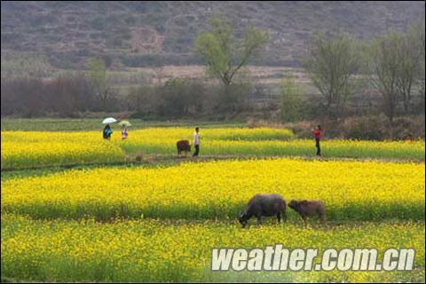 广西持续阴雨低温天气 新春早稻生产受影响