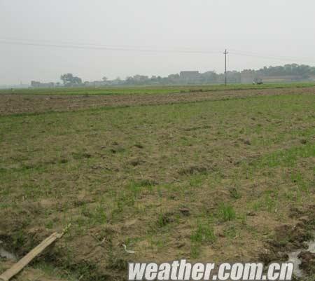 今春贵港雨水偏少破记录 群众抗旱抢农时
