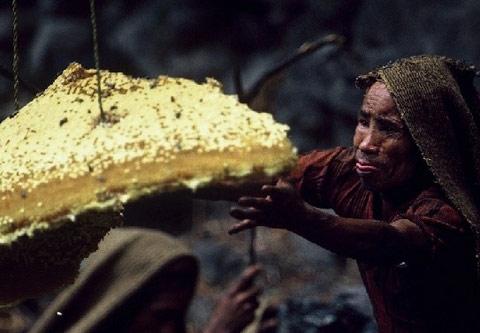喜马拉雅峭壁上的尼泊尔采蜂者