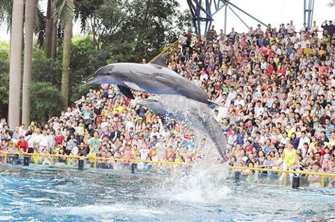动物园海洋馆的海豚表演场场满座.记者