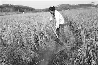 兴宾受旱农田相继获得灌溉