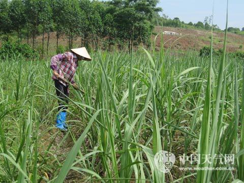 雨后土壤湿润,除草,施肥正.jpg