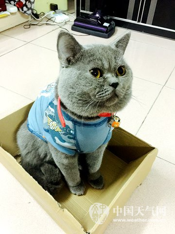 壁纸 动物 猫 猫咪 小猫 桌面 360_480 竖版 竖屏 手机
