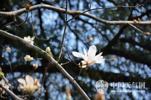 桂林持續升溫提前入春
