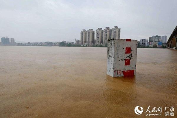 融江超警戒洪水上河堤