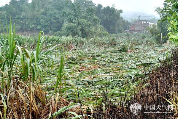 """""""莎莉嘉""""致桂南受灾严重 今起天气好转气温或达32℃"""