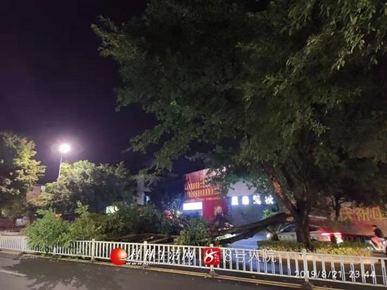桂林大树折断倒在路中央
