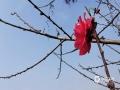 中国天气网广西站讯 近日,梧州藤县气温持续升高,藤县公园内春色盎然,各色花朵竞相开放,美不胜收。(图文/梁海兰)
