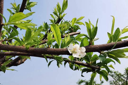 梧州暖意融融花朵竞放