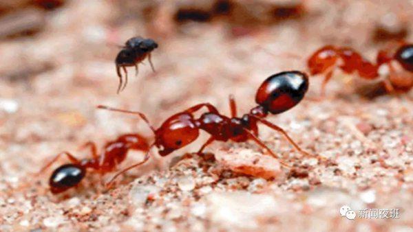小伙好奇踩蚂蚁窝 结果脚肿头晕胸闷......