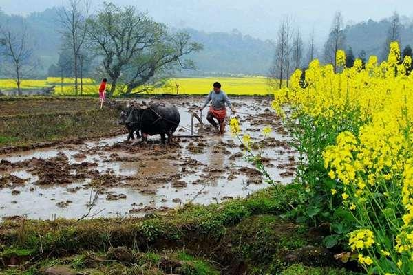 春分时节阴雨寡照基调 桂东北率先进入雨季