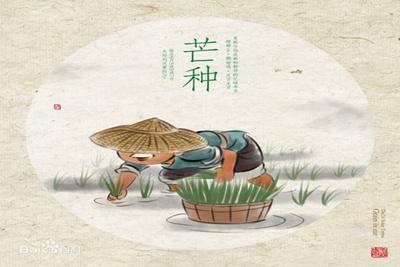芒种节气 一年中降雨高峰期