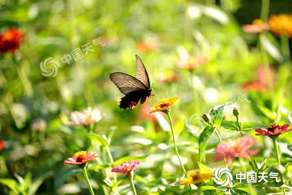 http://www.nyzenghui.com/haikoufangchan/24534.html