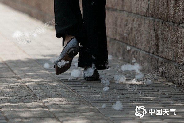 今天北京晴暖在线 城区杨柳絮进入高发期