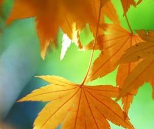 国庆假日期间天气趋势预报(10月1-7日)