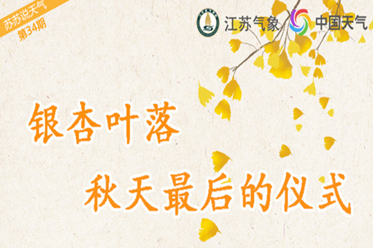 银杏叶落 秋天最后的仪式