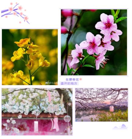 4图云赏花压缩版本_meitu_2.jpg